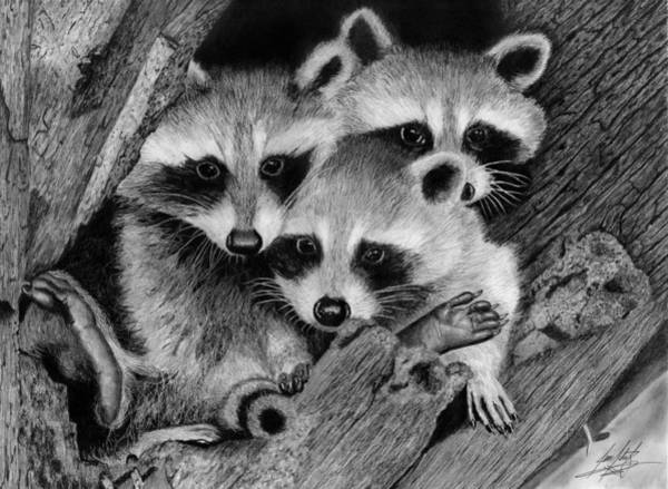 Trio Drawing - Baby Raccoons Drawing by James Schultz