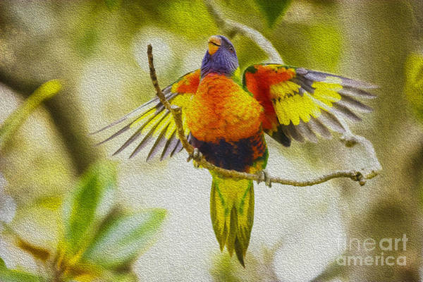 Wall Art - Photograph - Baby Rainbow Lorikeet by Sheila Smart Fine Art Photography