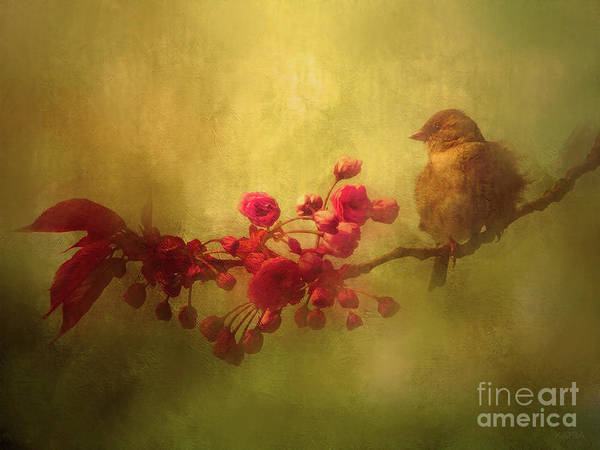 Blooming Tree Mixed Media - Baby Sparrow by KaFra Art