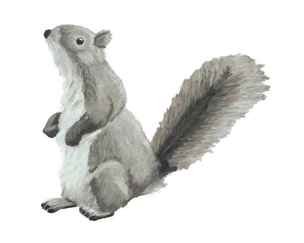 Drawing - Baby Squirrel by Dominic White