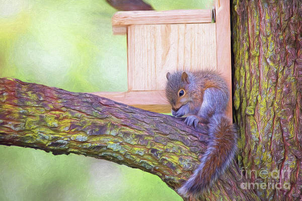 Eating Mixed Media - Baby Squirrel In The Tree by Sharon McConnell