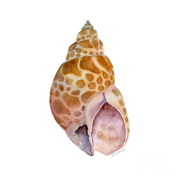 Wall Art - Painting - Babylon Japonica Shell by Amy Kirkpatrick