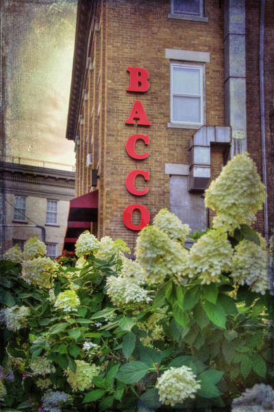 Photograph - Bacco - Boston North End by Joann Vitali