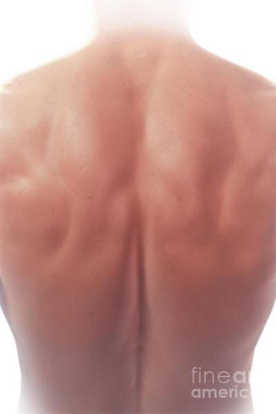 Photograph - Back Anatomy by Science Picture Co