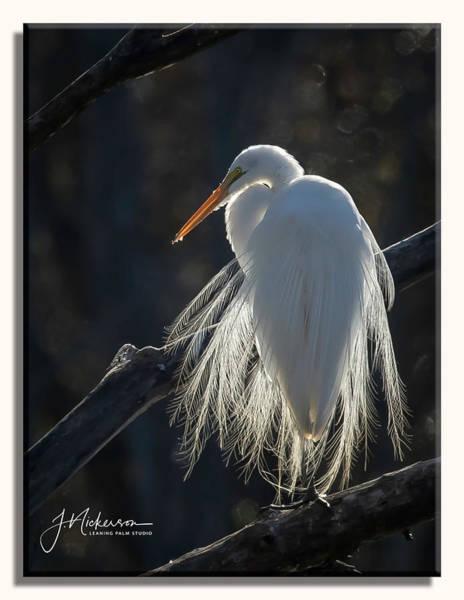 Photograph - Back Lit Egret by John Nickerson