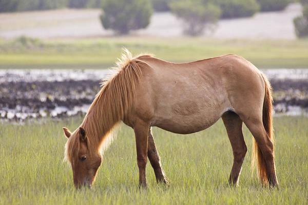 Photograph - Back-lit Wild Horse by Bob Decker