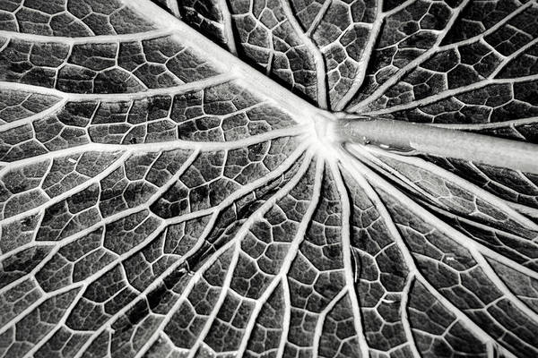 Don Johnson Photograph - Back Of A Water Lily Pad by Don Johnson