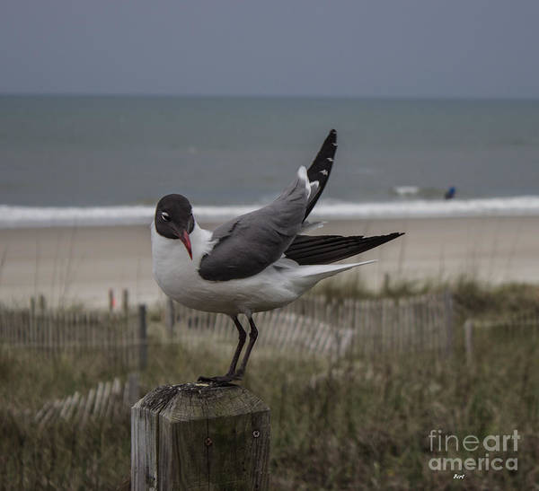 Photograph - Back Off Seagull by Roberta Byram