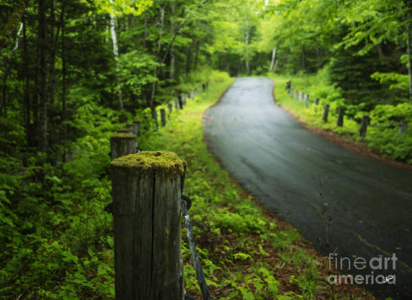 Photograph - Back Road by Alana Ranney