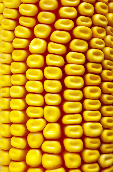 Corn Photograph - Background Corn by Carlos Caetano