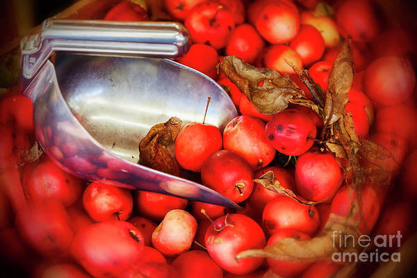 Photograph - Background Of Apples by Ariadna De Raadt