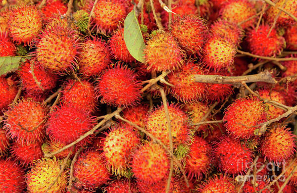 Quang Nam Province Photograph - Background Of Rambutans by Lisa Top