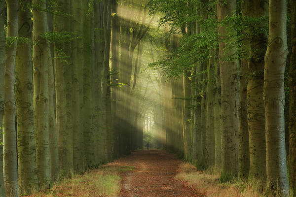 Wall Art - Photograph - Backlight by Martin Podt