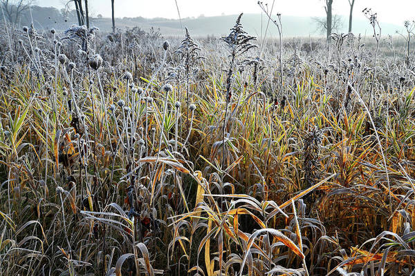 Photograph - Backlit Frosted Grasses Along Nippersink Creek In Glacial Park by Ray Mathis