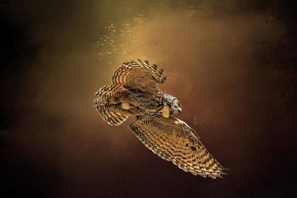Owl In Flight Photograph - Backlit Owl by Donna Kennedy