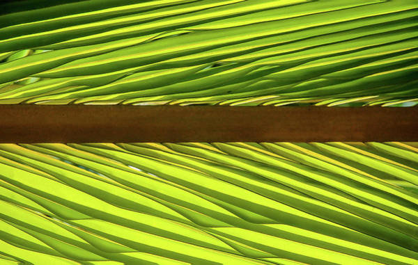 Photograph - Palm West by Herb Paynter