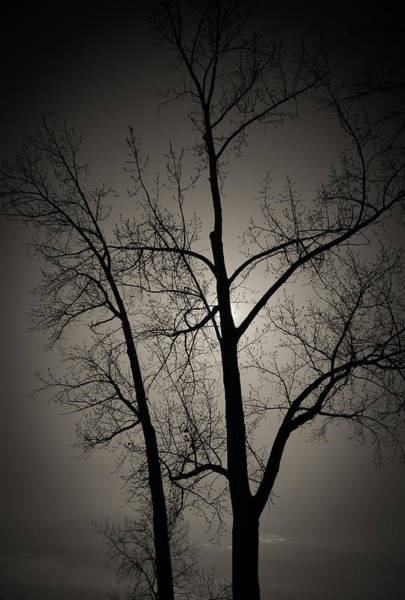 Photograph - Backlit Trees by Trance Blackman