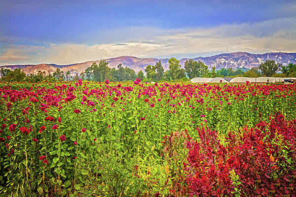 Photograph - Backroad Beauty In Southern California by Lynn Bauer