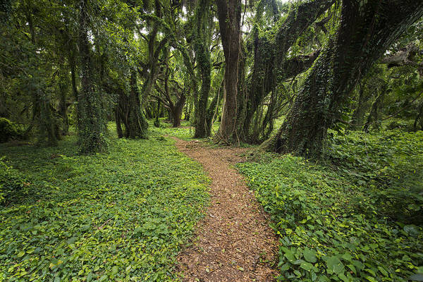 Photograph - Backwoods Path by Jon Glaser