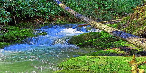 Backwoods Stream Art Print