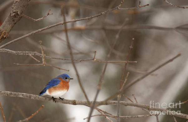 Photograph - Backyard Blue by Ed Taylor