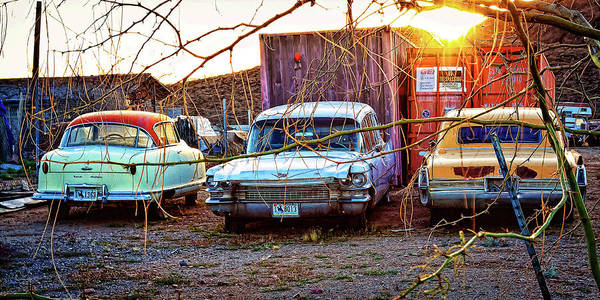 Photograph - Backyard Jewells by Tatiana Travelways
