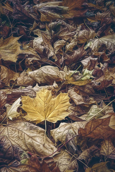 Pile Photograph - Backyard Leaves by Scott Norris