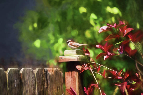 Wall Art - Photograph - Backyard Songbird by Bonnie Bruno
