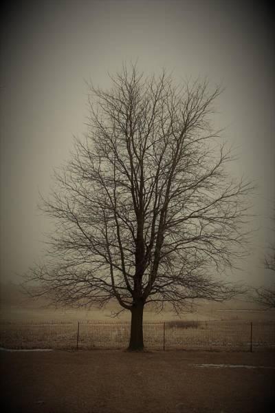 Wall Art - Photograph - Backyard Tree by Toni Grote