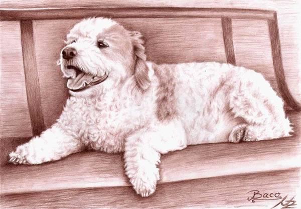 Hund Drawing - Baco by Nicole Zeug