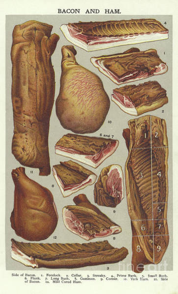 Wall Art - Drawing - Bacon And Ham  by English School