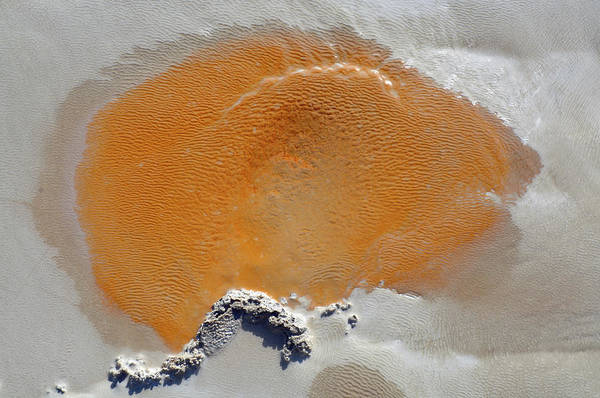 Photograph - Bacteria Art Orange Mouse by Bruce Gourley
