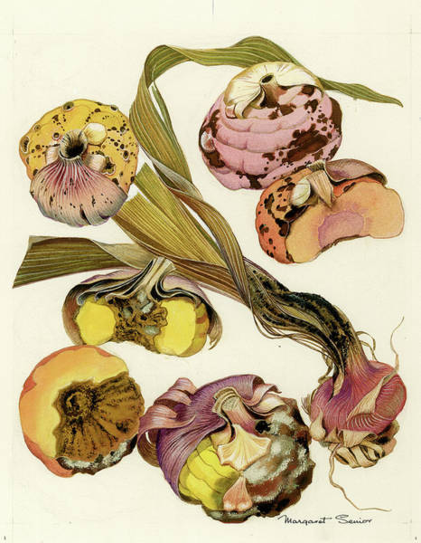 Virus Painting - Bacterial Scab, Sclerotinia And Botrytus Rots Of Gladiolus by Margaret Senior