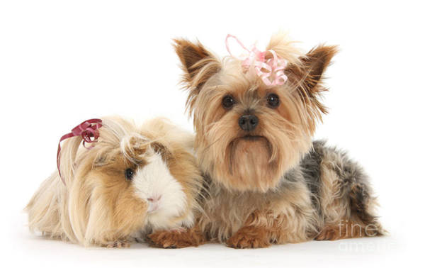 Photograph - Bad Hair Day Bows by Warren Photographic