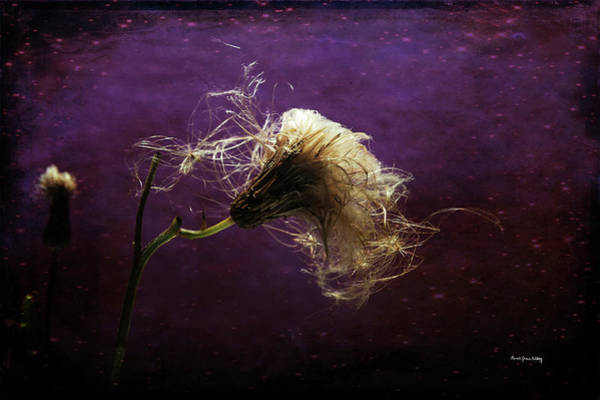 Photograph - Bad Hair Day by Randi Grace Nilsberg