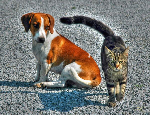 Photograph - Bad Kitty 3 by Sam Davis Johnson