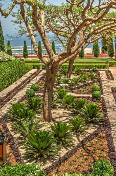 Photograph - Bahai Gardens In Haifa 1 by Dimitry Papkov