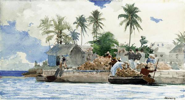 Sponge Painting - Bahamas  by Winslow Homer
