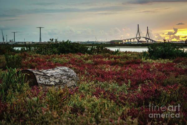 Photograph - Bahia De Cadiz Natural Park Cadiz Spain by Pablo Avanzini