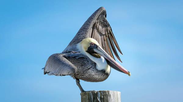 Photograph - Balancing Act by Van Sutherland