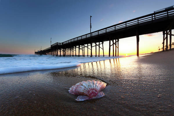 Out Of The Ordinary Photograph - Balboa Shell. by Sean Davey