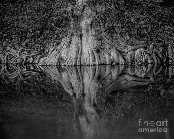 Wall Art - Photograph - Bald Cypress Reflection In Black And White by Michael Tidwell