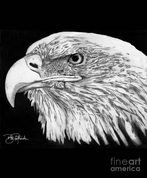 Drawing - Bald Eagle #4 by Bill Richards