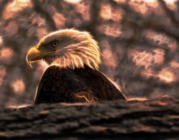 Digital Art - Bald Eagle Electrified by Chris Flees