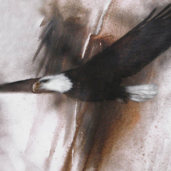 Painting - Bald Eagle Flight by Jackie Flaten