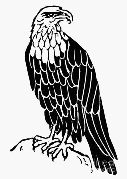 Photograph - Bald Eagle by Granger