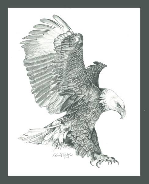 Bald Eagles Drawing - Bald Eagle In A Dive by Robert Wilson