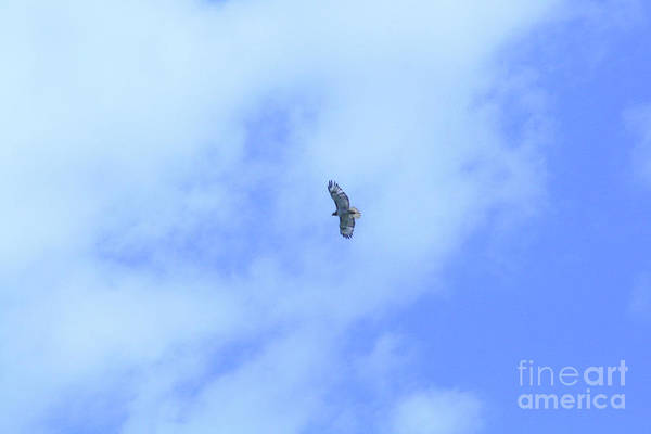 Photograph - Golden Eagle In Flight by Mary Mikawoz