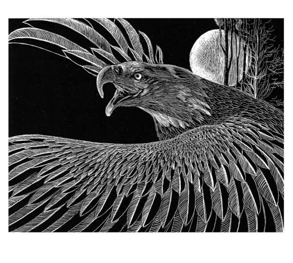 Bald Eagles Drawing - Bald Eagle by Kean Butterfield