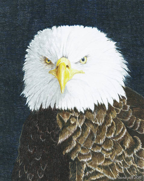 Wall Art - Drawing - Bald Eagle by Laurie With